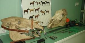Korekcija zuba u konja