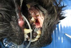 Kirurgija usne šupljine