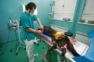 Top kirurgija za male životinje 2