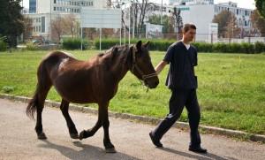 Kolika u konja